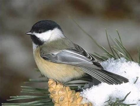 13 best images about birds in my yard yep i m getting