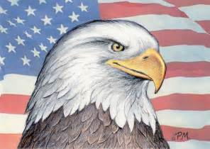 American Bald Eagle Drawings
