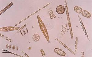 Marine Scotland Monitoring Marine Phytoplankton - Marine ...