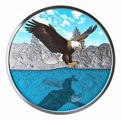 Eagle Bald Silver Coin Canada Oz Reflection