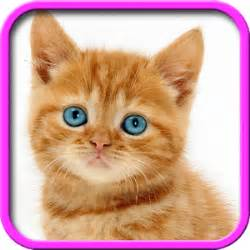 apps for cats talking cat android apps on play