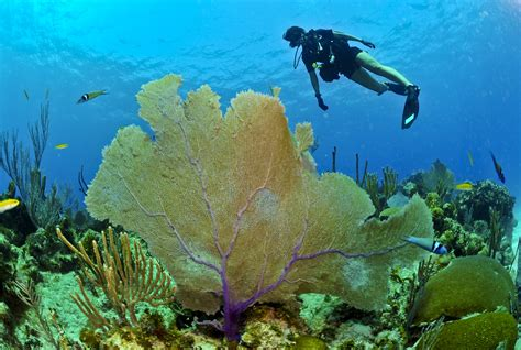 images sea ocean swimming coral reef plants