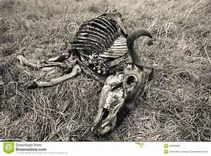 Wildlife Animal Skeleton Stock Photo - Image: 43565003