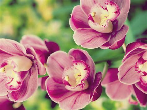 Tropical Flowers A10 Hd Desktop Wallpapers 4k Hd