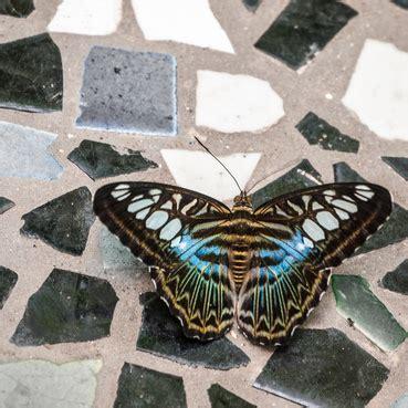 Bunte Trittsteine Fuer Den Garten Herstellen Mit Mosaik Steinchen Und Beton by Bunte Mosaiksteine Als Highlight F 252 R Den Garten Garten