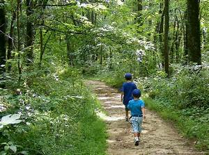 Walking a trail in Brown County... | © JerPhotography ...