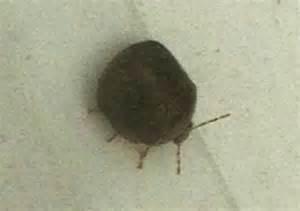 Bugs That Look Like Ticks