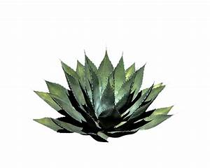 Top 28+ Plant A plants quiz middle school proprofs