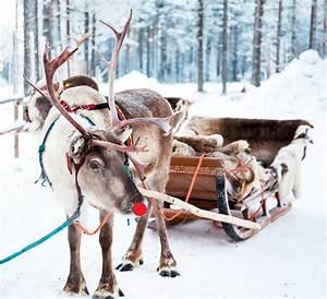 Nom Des Rennes Du Pere Noel : rudolphe le renne au nez rouge carte de v ux et tiquettes cadeaux pour no l la fabricamania ~ Medecine-chirurgie-esthetiques.com Avis de Voitures