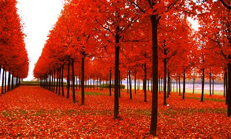 Beautiful Autumn Trees Wallpapers by Autumn Season Falling Leaves Morewallpapers