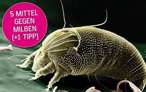 Mittel Gegen Holzwurm Test : mittel gegen milben bei katzen 5 produkt tippskratzbaum ~ Whattoseeinmadrid.com Haus und Dekorationen
