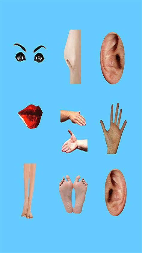 body parts basic