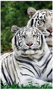 100 Animals wallpapers collection in HD form. This is a ...
