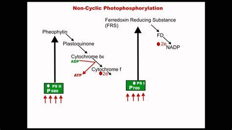 cyclic photophosphorylation dr magadi  gurudeva