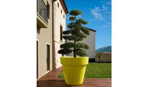 bureau contemporain bois massif grand pot ikon pour arbuste et plantes d 39 exception jarre