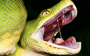 Terrifying Facts About Snakes That Will Give You ...
