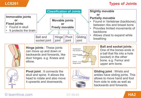 Icse Grade 7 Biology Movement In Living Things