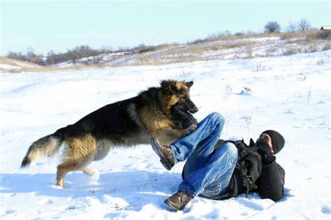 wer braucht einen hund wer zahlt wenn mein hund einen unfall verursacht mydog365 magazin