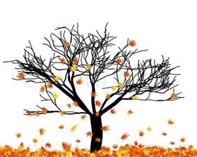 autumn maple tree in its falling leaves stock vector colourbox