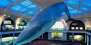 The Giant Blue Whale Model