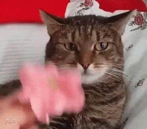 Funny Cat GIFs - Find & Share on GIPHY