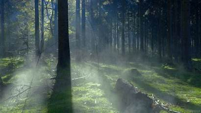 Forest Nature Fog Gifer Perfect Mist Loop