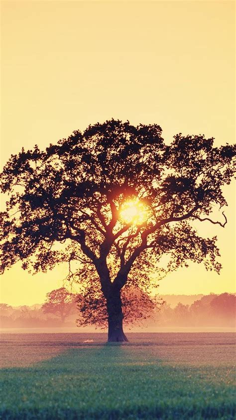 Beautiful Tree Phone Wallpaper by Sunset Tree Branches Android Wallpaper Free