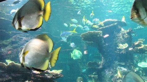 aquarium nord pas de calais aquarium tropical picture of nausicaa centre national de la mer boulogne sur mer tripadvisor