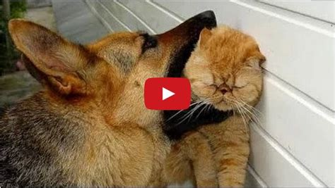 Cats Prove They Are More Fierce Fighters Than Dogs