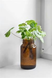 Geranien Vermehren In Wasser : geranien vermehren mit diesen methoden ganz einfach ~ Watch28wear.com Haus und Dekorationen