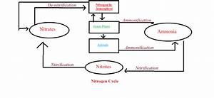 How Do You Draw The Nitrogen Cycle