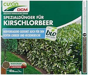 Dünger Für Kirschlorbeer : d nger lorbeer test gartenbau f r jederman ganz ~ Lizthompson.info Haus und Dekorationen