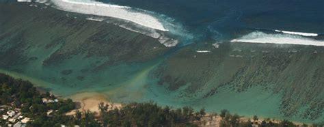 formation bureau etude les coraux de l 39 ile de la réunion s 39 appauvrissent sous la