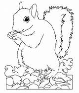 Squirrel Coloring Pages Cute Printable Animal Sheets Squirrels Wild Print Popular Rescue Getdrawings Getcolorings Coloringhome sketch template