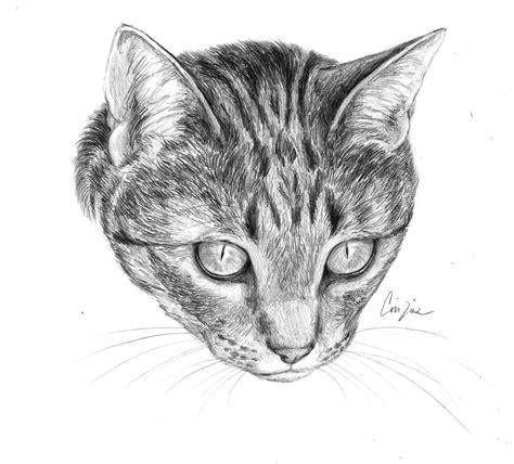 disegni gatti disegno libero  disegni  gatti