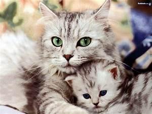 Ikbhal: cute ki... Cute Cats
