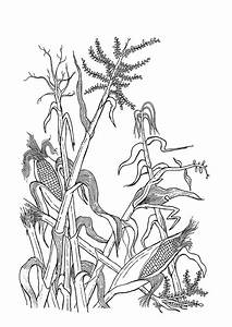 Corn Stalk Outline images