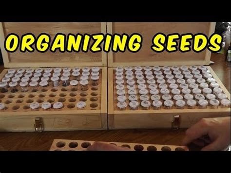 vegetable storage how to store and organize your seed collection