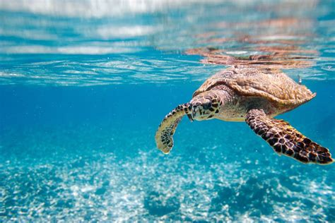 Sea Animals Wallpapers Free - africa turtle nature blue sea animals wallpapers hd