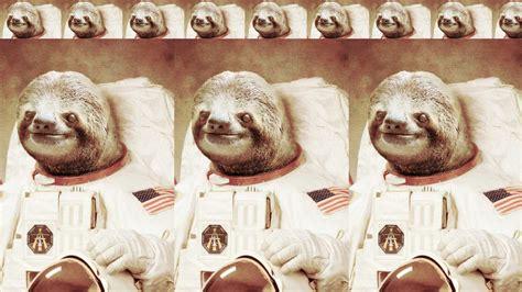 Cute Sloth Wallpaper 67 Images