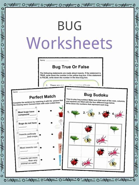 bug insect facts worksheets information  kids