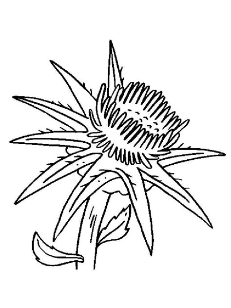 thistle flower coloring pages   print thistle flower coloring pages