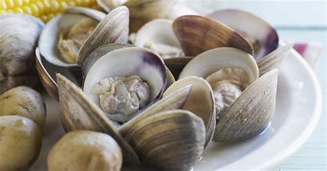 types of clams types of edible clams ehow uk