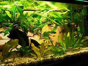 60 Liter Becken : community mein aquarium ~ Michelbontemps.com Haus und Dekorationen