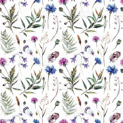 Watercolor Wildflowers Pattern Wildflower Drawn Vector Hand