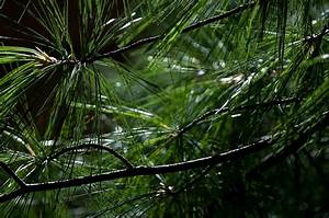What Is Evergreen Content  Your Guide To Long
