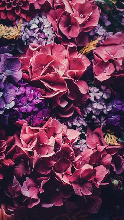Iphone Floral Wallpapers Background Backgrounds Laptop Followers