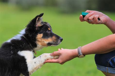 clicker hund kaufen training anleitung aufbau anfang