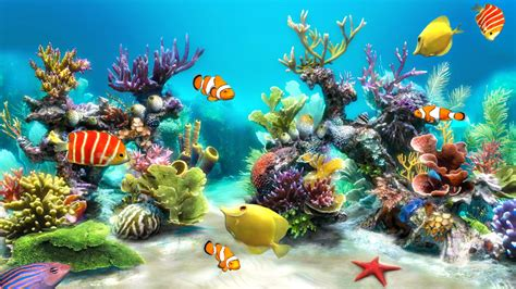 bureau aquarium fish tank backgrounds pixelstalk