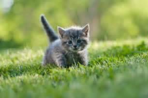 gray cat names names for gray kittens